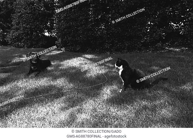 Black and white photograph of Socks the Cat and Buddy the Dog, First Family's pets, sitting on the White House south lawn, June 16, 1998