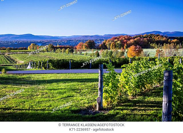 A vineyard on the island of Ile d'Orleans, Quebec, Canada