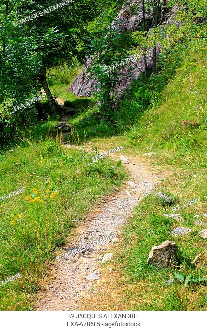 Path at spring time in the Pyrenees, France
