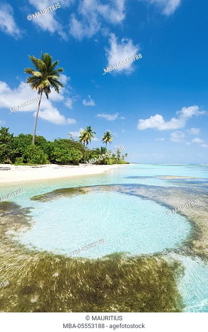 Guadeloupe, France, the Caribbean, island, Basse-Terre, tropical, sea, beach, Sand, palms