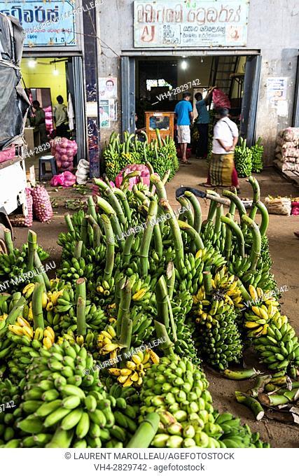 Banana Bunches at the Market of Dambulla, North Central Province, Sri Lanka, Asia