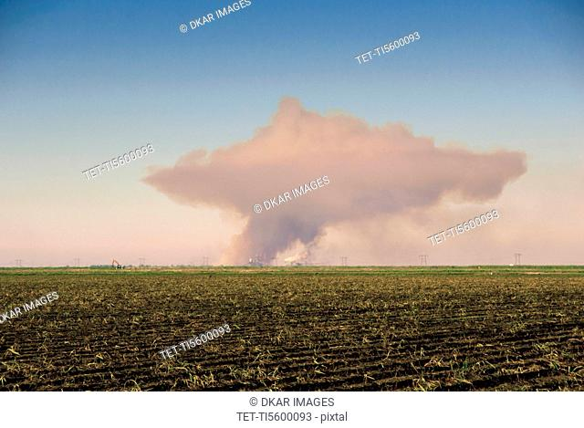 Sugar cane field with smoke on horizon