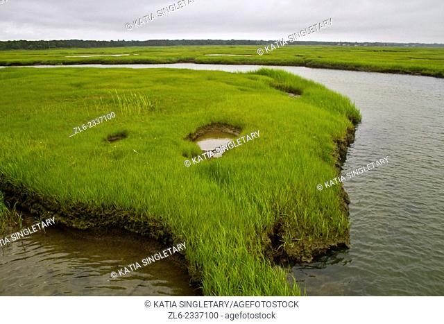 Green Marsh surrounded by water in the middle of the town of Sandwich in Cape cod, Massachusset