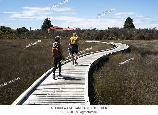 Walking path in Okarito, South Island, New Zealand