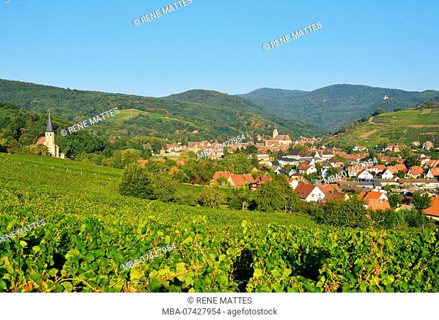 France, Bas Rhin, Alsace Wine Route, Andlau