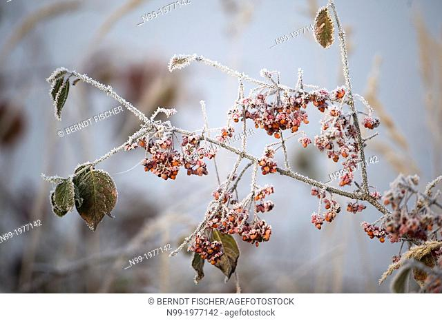 Colours of autumn and hoar frost, Bavaria, Germany