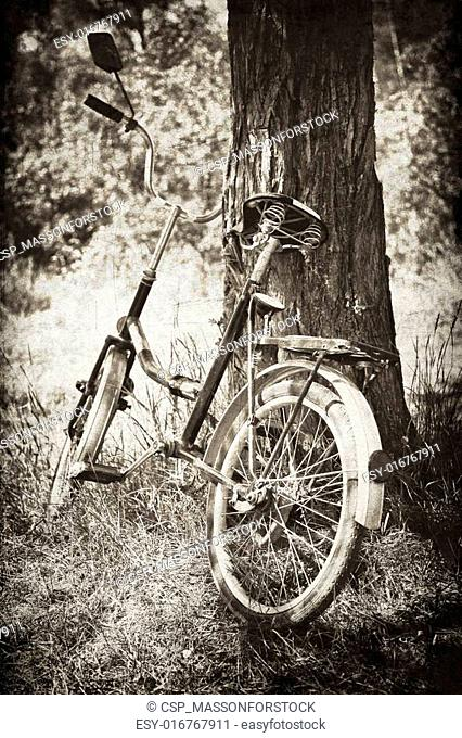 Old bike near tree