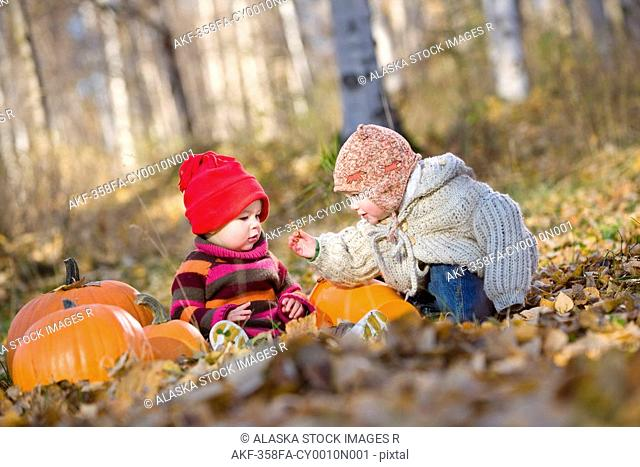 Two young girl toddlers playing in the Fall leaves next to pumpkins in a forested area of Anchorage in Southcentral Alaska