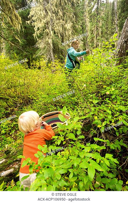A woman and her two kids pick huckleberries in Kokanee Glacier Provincial Park, although her oldest boy is having his share now
