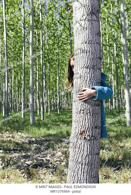 Ten year old girl peering behind commercially grown poplar tree on large tree farm, near Pendleton