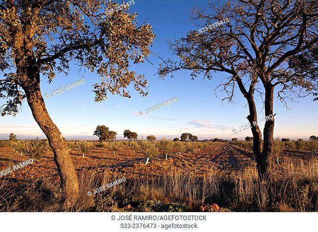 Country in Navahermosa. Toledo. Castilla la Mancha. Spain. Europe