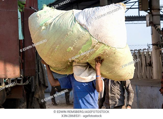 Worker carrying a large sack of hay on his head on a farming facility in Punjab, India