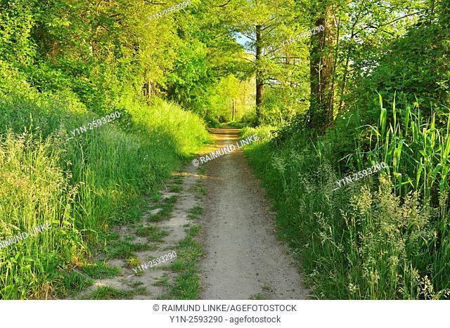 Bank Way at Morning in Spring, Niedernberg, Miltenberg-District, Churfranken, Franconia, Bavaria, Germany