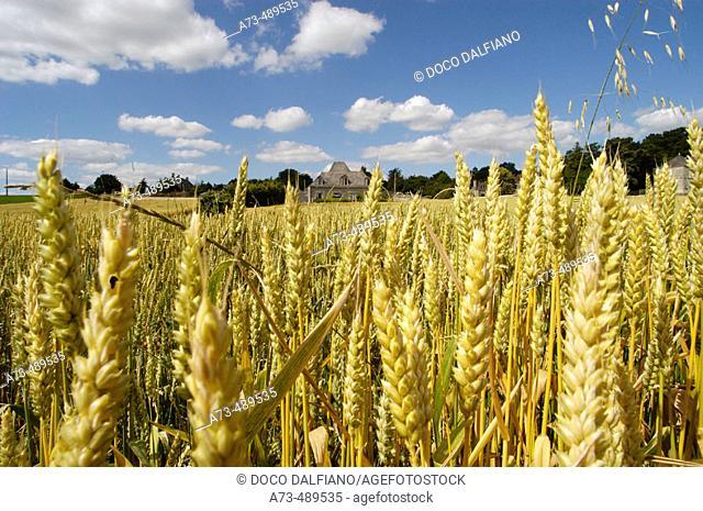 Landscape near the village. Coutures. Maine et Loire. France