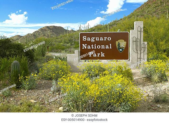Saguaro National Park West, Tucson, AZ Welcome Sign features giant Sonoran saguaro cactus