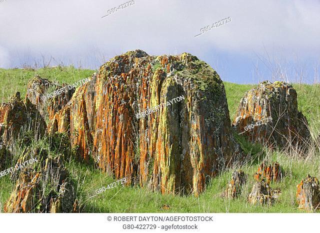 Merced Lichen Fields. Merced County, California, USA. Spring, 2005