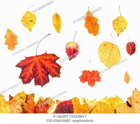 autumn season - collage from red and yellow leaves isolated on white background