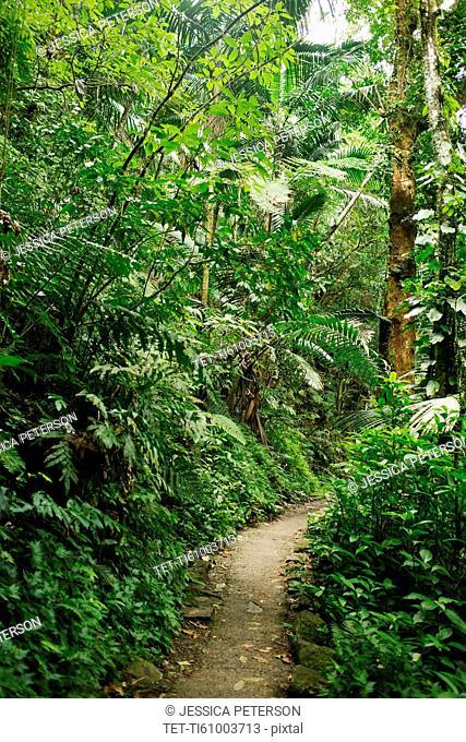 Caribbean Islands, Saint Lucia, Path in tropical forest