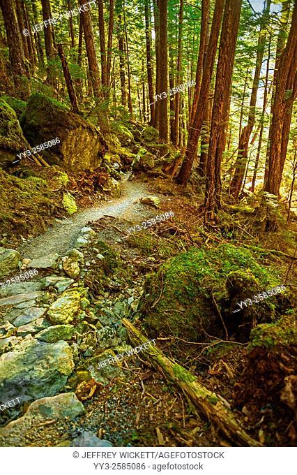 Beaver Lake Trail, Tongass National Forest near Sitka, Alaska