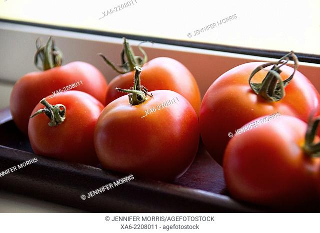 Fresh tomatoes from the garden ripen on a windowsill