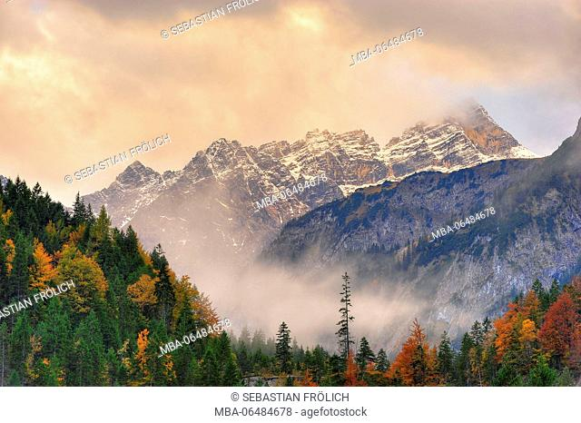 Mountain wood, single big conifer in front of the Laliderer Spitze in the Karwendel