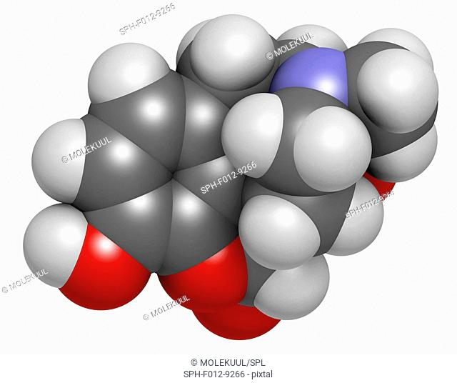 Oxymorphone opioid analgesic drug molecule. Atoms are represented as spheres and are colour coded: hydrogen (white), carbon (grey), oxygen (red)