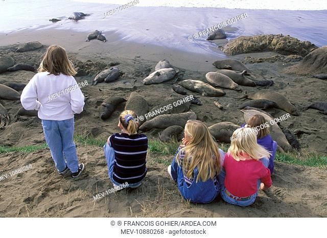 Northern Elephant Seal - watched by children (Mirounga angustirostris). Piedras Blancas colony (north of San Simeon - North America - Pacific Ocean
