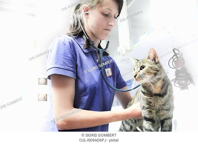Vet using stethoscope on cat