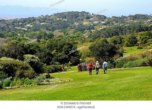 Botanischer Garten von Kirstenbosch, Protea-Garten, Kapstadt, Südafrika / Botanical Garden Kirstenbosch, Protea garden, Botanical Garden Kirstenbosch, Cape Town