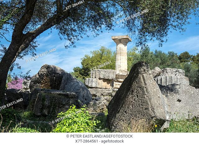 A re erected doric column towers over similar fallen capitals and column drums at the Temple of Zeus at ancient Olympia, Peloponnese, Greece