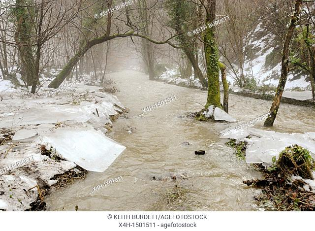 The River Wyre in woodland near Llanrhystud, Wales after the flood and thaw with broken ice sheets lining the river bank, Winter