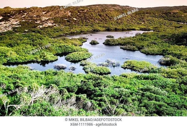 wetland in Favaritx Cape  S'Albufera des Grau Natural Park  Minorca, Balearic Islands, Spain, Europe