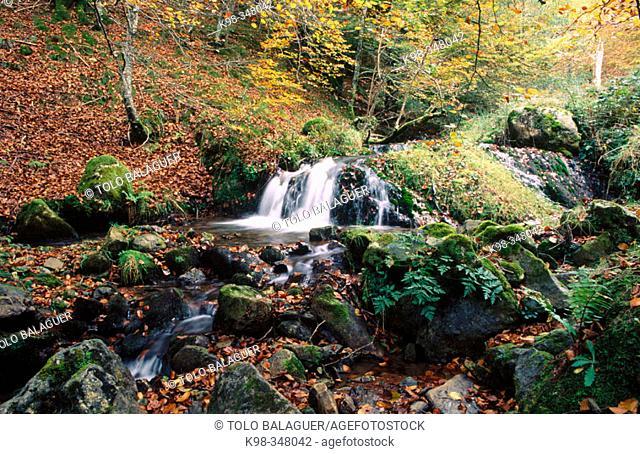 Irati river and beechwood. Ochagavía. Navarre. Spain