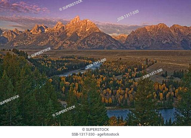 Aspen trees with Mt Moran in the background, Snake River, Grand Teton National Park, Wyoming, USA
