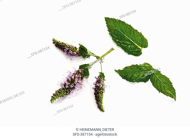 Peppermint leaves and flowers