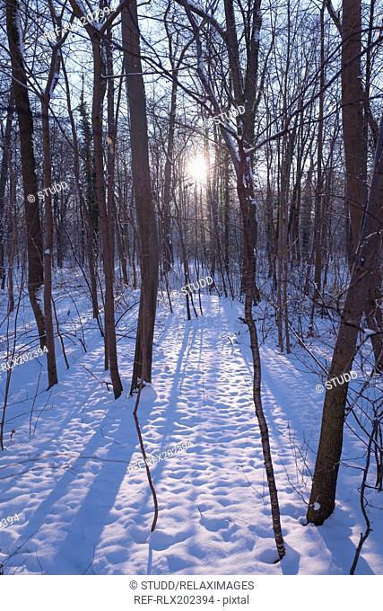 Forest sunlight trees snow Silhouette Lens Flare