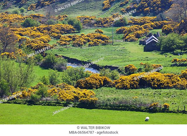 UK, Northern Ireland, County Antrim, Torr Head, Torr Head Scenic Road, coastal landscape