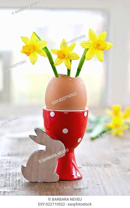 Frische Osterglocken in Eierschale