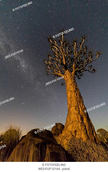 Africa, Namibia, Keetmanshoop, Quiver Tree Forest at night, milky way
