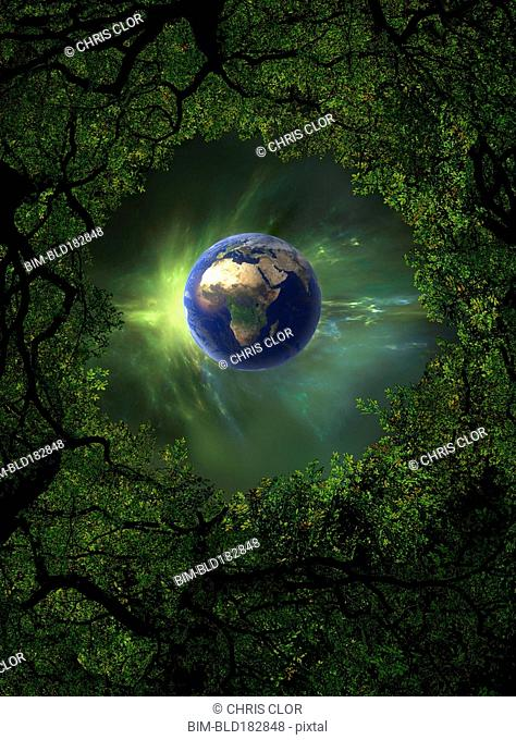 Low angle view of Earth, night sky and tree canopy