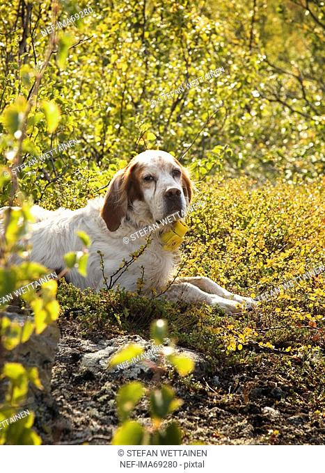 A dog in the sun, Sweden