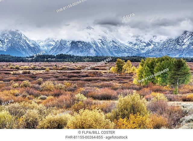 View of mountain range and trees in autumn colour, Grand Teton N.P., Wyoming, U.S.A., September