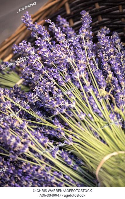 Lavender in a basket Sault Vaucluse Provence-Alpes-Côte d'Azur France