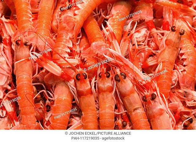 Fresh red shrimps are offered at Malaga's fish market, 12 February 2019. | usage worldwide. - Malaga/Spain