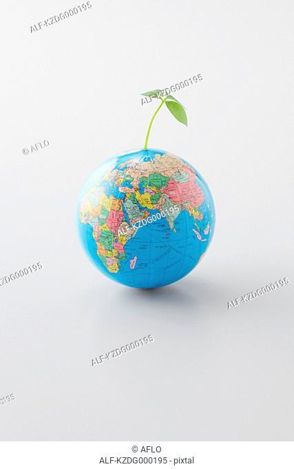 Plant Growing On Planet Earth