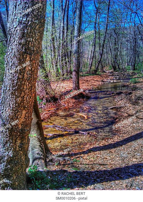 Forest, Montseny Natural Park, Catalonia