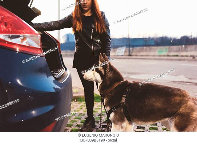 Woman persuading dog into car boot