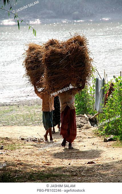 Farmers carry bundle of paddy straw Chittagong, Bangladesh January 2009
