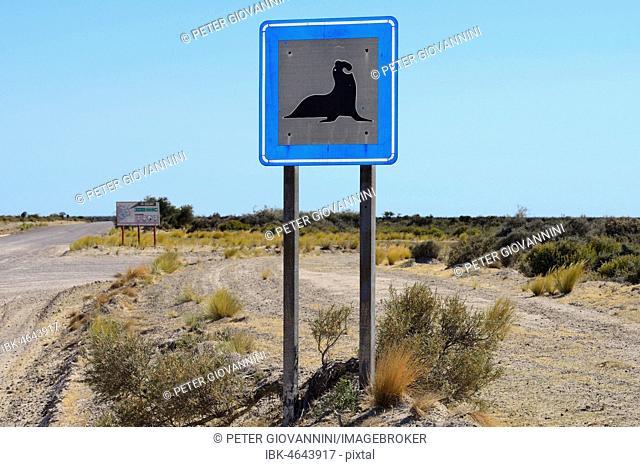 Warning sign on the road, southern elephant seal, Peninsula Valdes, Chubut, Argentina