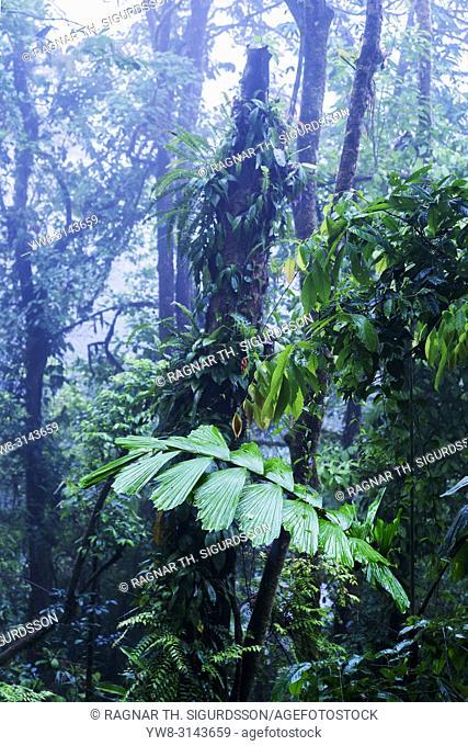 Trees, RainForest, Costa Rica